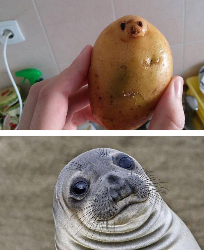 18_seal