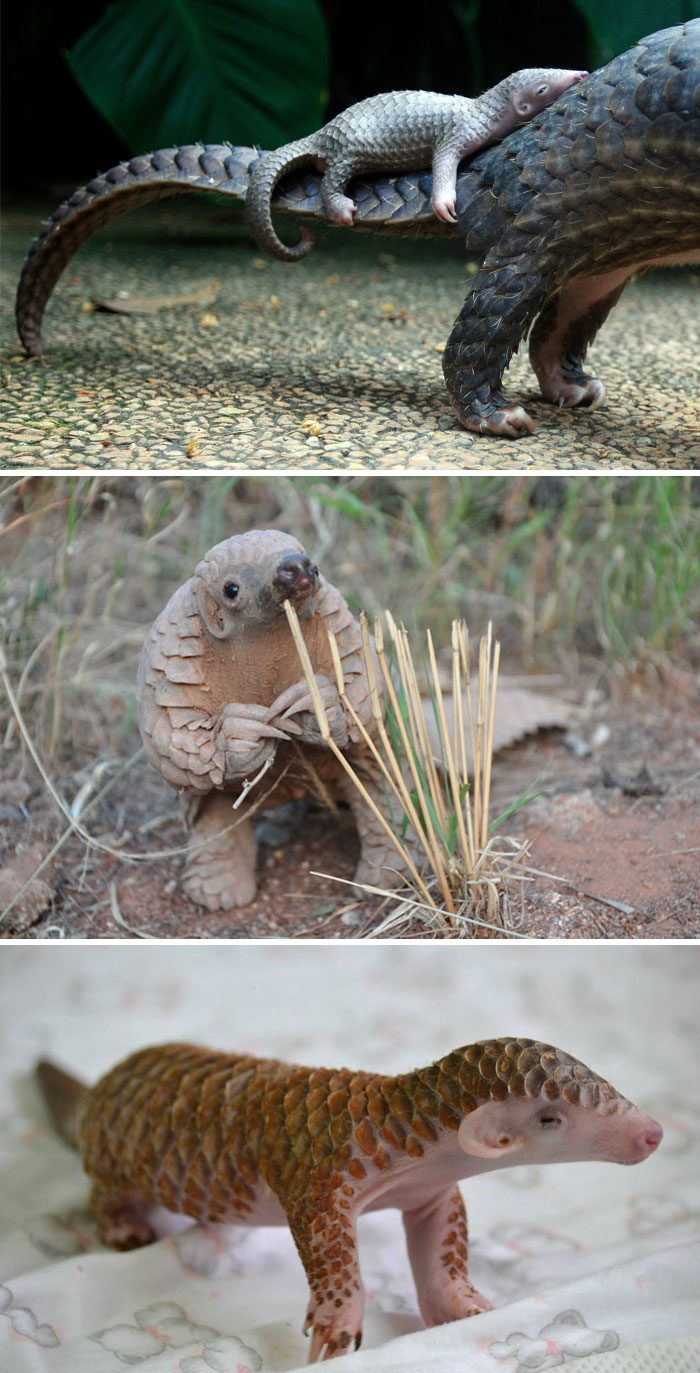 10+ Rare Animal Babies You Have Probably Never Seen Before